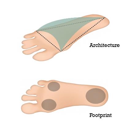 Der Fuß als Dreibein