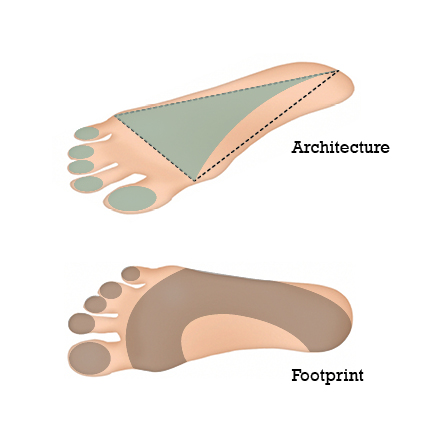 functional-foot-defined