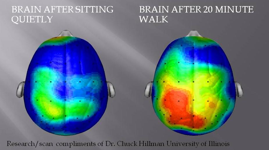 brain-after-20-minute-walk-uk