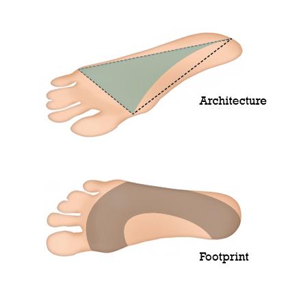 Der Fuß als Halbkuppel